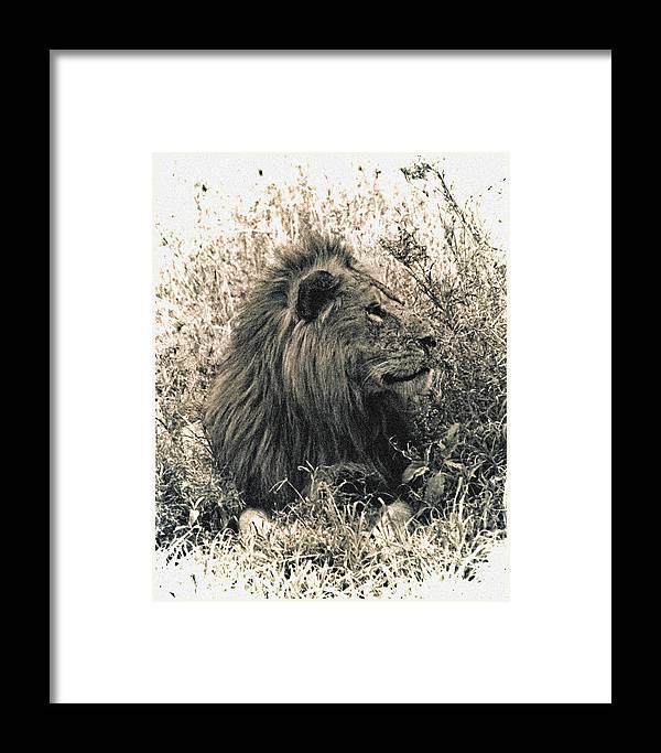 Serengeti Framed Print featuring the photograph King Waiting by Marvin Seiger