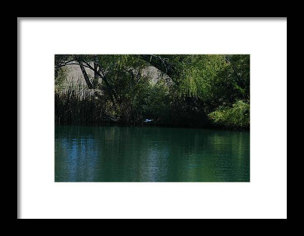 Kingfisher Framed Print featuring the photograph Kingfisher In Flight by Teresa Stallings