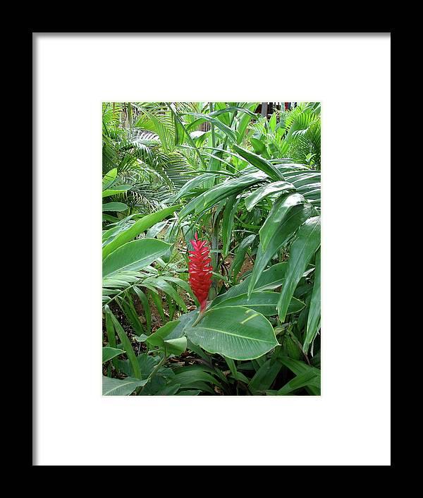 Kingston Framed Print featuring the photograph Kingston Jamaica Foliage by Brett Winn