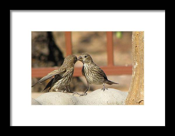 Birds Framed Print featuring the photograph Kissing Cousins by Marilyn Barton