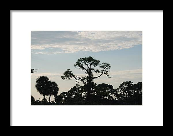 Kite Framed Print featuring the photograph Kite In The Tree by Rob Hans