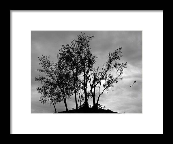 Kite Framed Print featuring the photograph Kite by Todd Fox