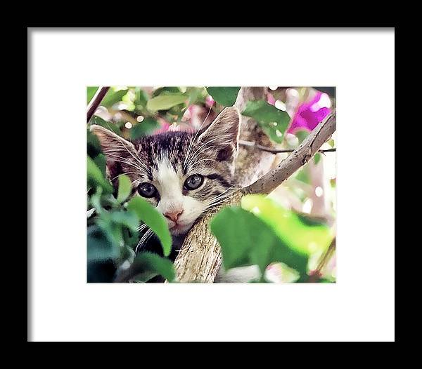 Cat Framed Print featuring the photograph Kitten Hiding Out by Francesco Roncone