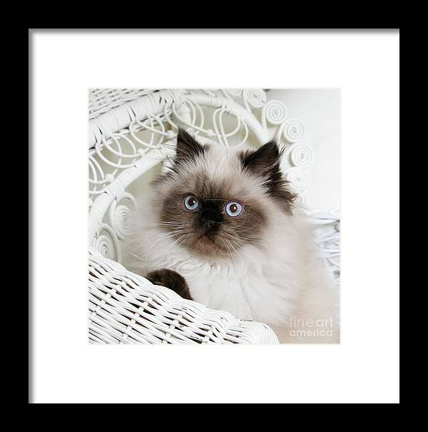 Animal Framed Print featuring the photograph Kitten Portrait by Crystal Garner