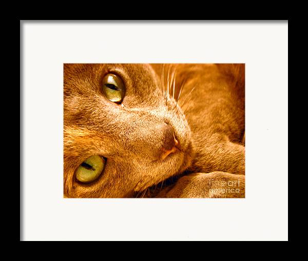 Cats Framed Print featuring the photograph Kitty by Amanda Barcon