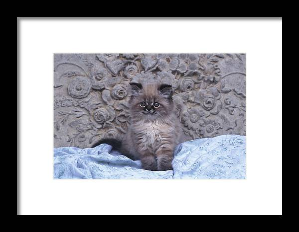 Tree Framed Print featuring the photograph Kitty by Joe Palermo