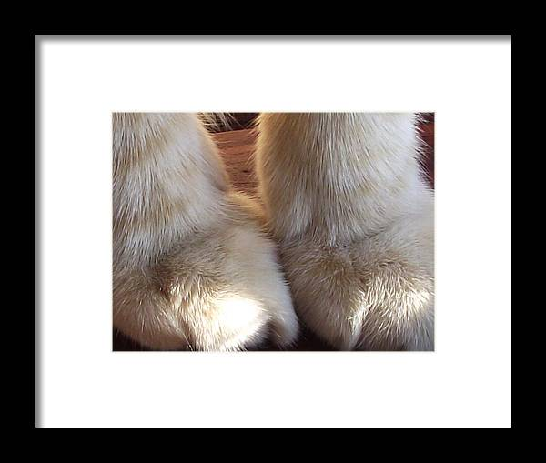 Orange Tabby Cat Framed Print featuring the photograph 'kitty Paws' by Paula Heffel