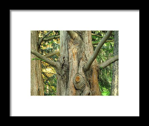Tree Framed Print featuring the photograph Knarled by Ian MacDonald