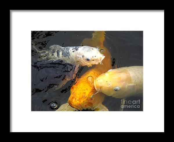 Koi Framed Print featuring the photograph Koi Fish 5 by Marta Robin Gaughen
