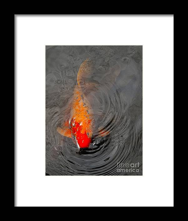 Fish Framed Print featuring the photograph Koi At Byodo Temple by Neil Doren