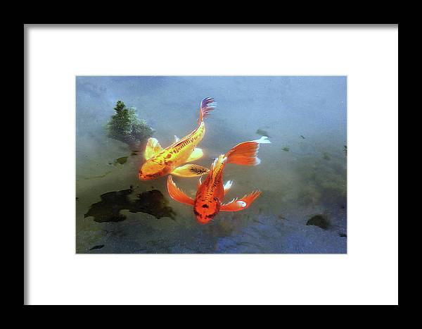 Koi Framed Print featuring the photograph Koi Surreal by Warren Birge