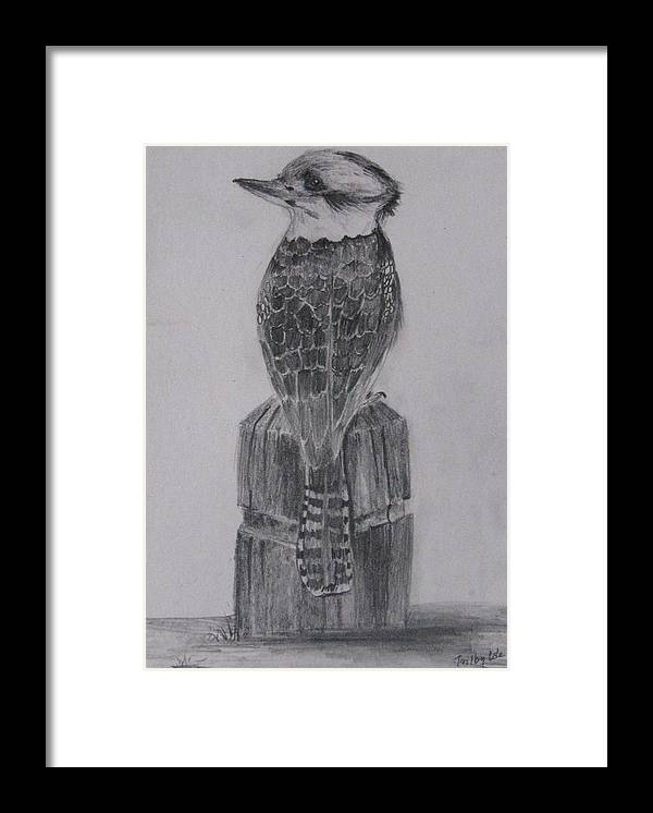 Kookaburra Framed Print featuring the drawing Kookaburra by Trilby Cole