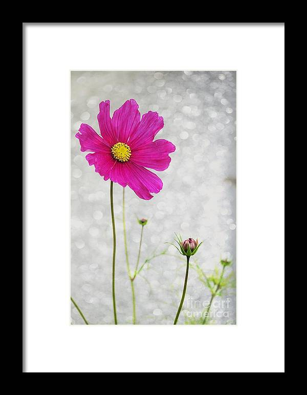 Flower Framed Print featuring the photograph L Elancee by Variance Collections