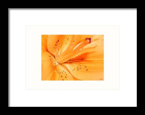 Flower Framed Print featuring the photograph La Flower by Ruben Flanagan