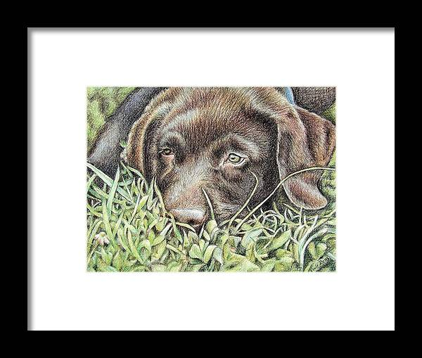 Dog Framed Print featuring the pastel Labrador Puppy by Nicole Zeug