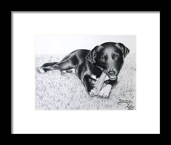 Dog Framed Print featuring the drawing Labrador Samy by Nicole Zeug