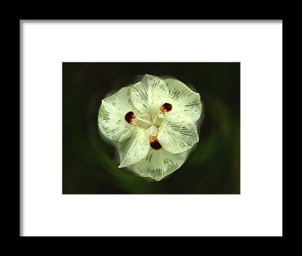 Botanical Framed Print featuring the photograph Lacey Flower 209 by David Houston