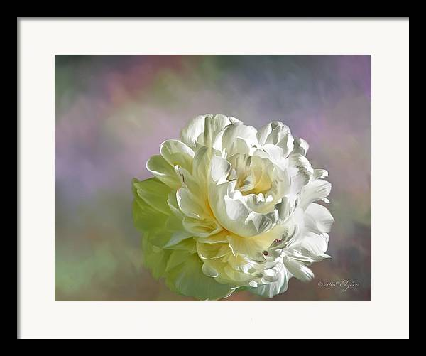 White Peony Framed Print featuring the painting Lacy by Elzire S