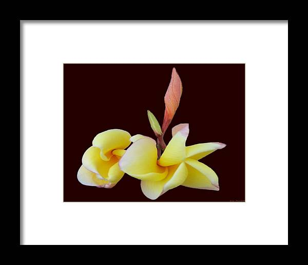 Flower Photography Framed Print featuring the photograph Ladies In Red 3 by Evelyn Patrick
