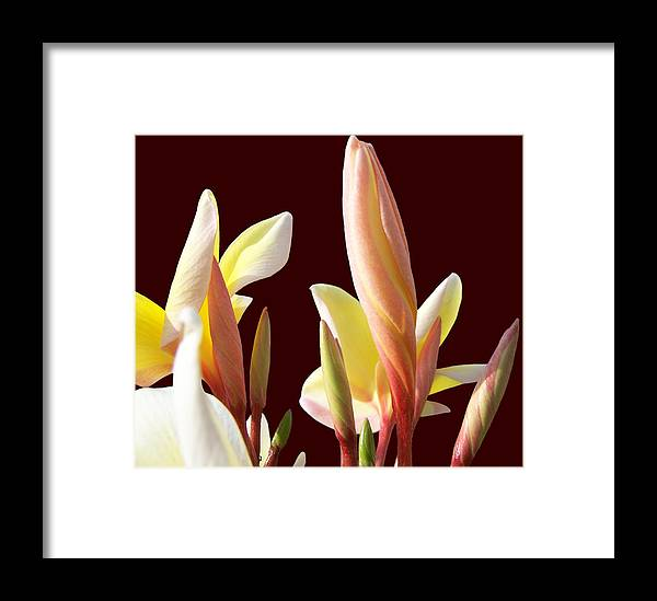 Flower Photography Framed Print featuring the photograph Ladies In Red by Evelyn Patrick