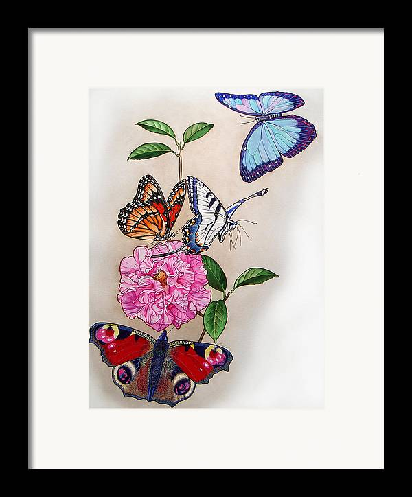 Butterflies Framed Print featuring the painting Ladies Of The Camellia by Vlasta Smola