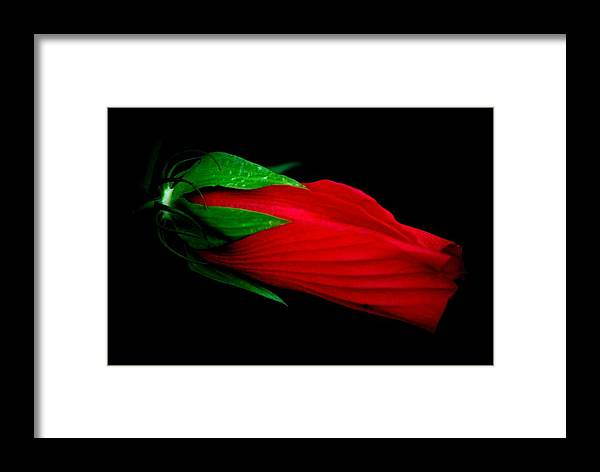 Flower Framed Print featuring the photograph Lady In Red by Trudi Southerland