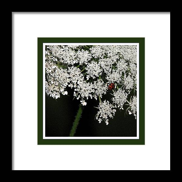 Ladybug Framed Print featuring the photograph Lady On Lace by Ginger Howland