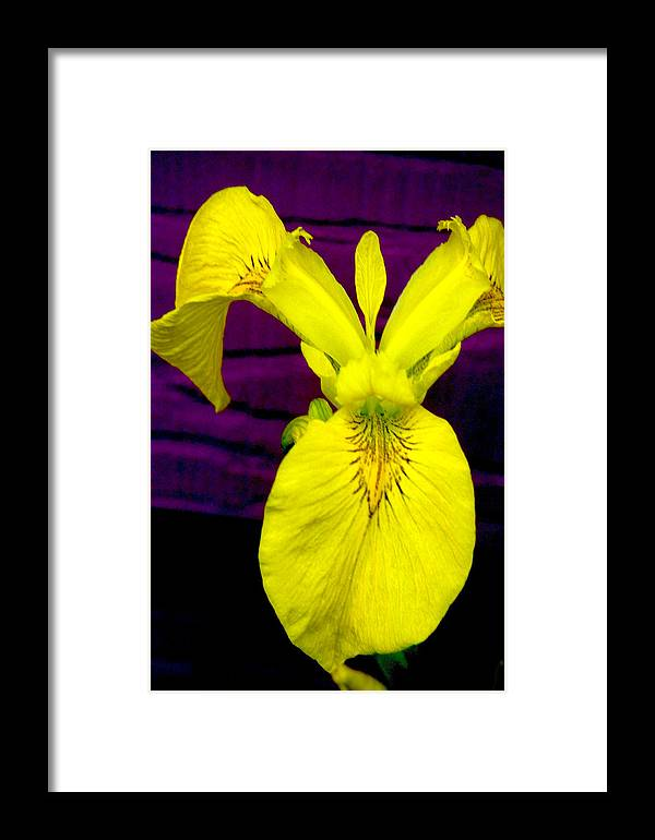 Flowers Framed Print featuring the photograph Lady Slipper by Patricia Ridlon