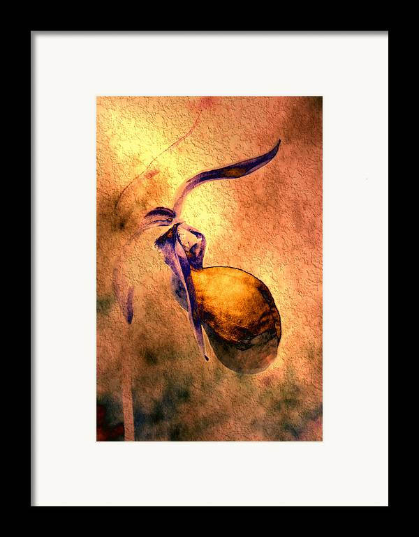 Framed Print featuring the photograph Lady Slipper by Roger Soule