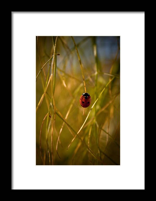 Ladybug Framed Print featuring the photograph Ladybug by Danielle Silveira