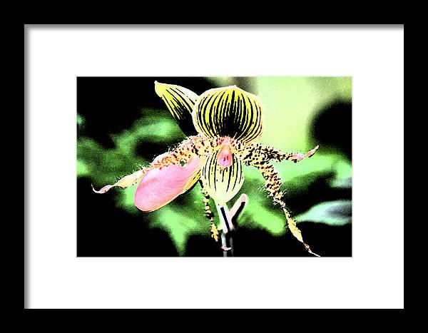 Orchid Framed Print featuring the photograph Lady's Slipper Orchid by Nanette Hert