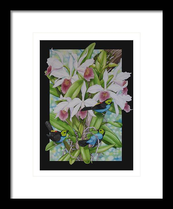 Orchids Framed Print featuring the painting Laelia Purpurata by Darren James Sturrock