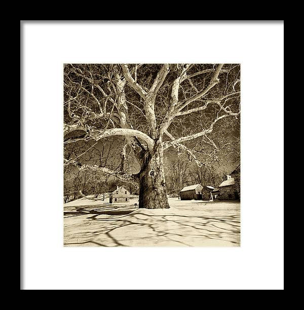 Sycamore Tree Framed Print featuring the photograph Lafayette Headquarters by Jack Paolini