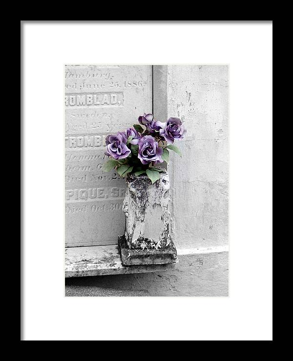 Roses Framed Print featuring the photograph Lafayette No One Purple Roses by Heather S Huston