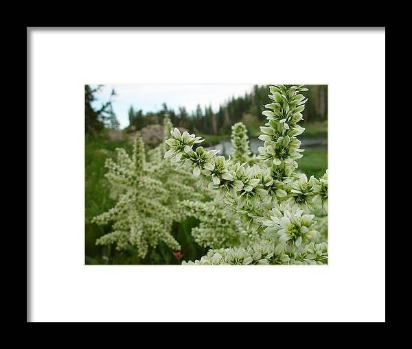 Flower Framed Print featuring the photograph Lake Catherine Bloom by Derek Nielsen