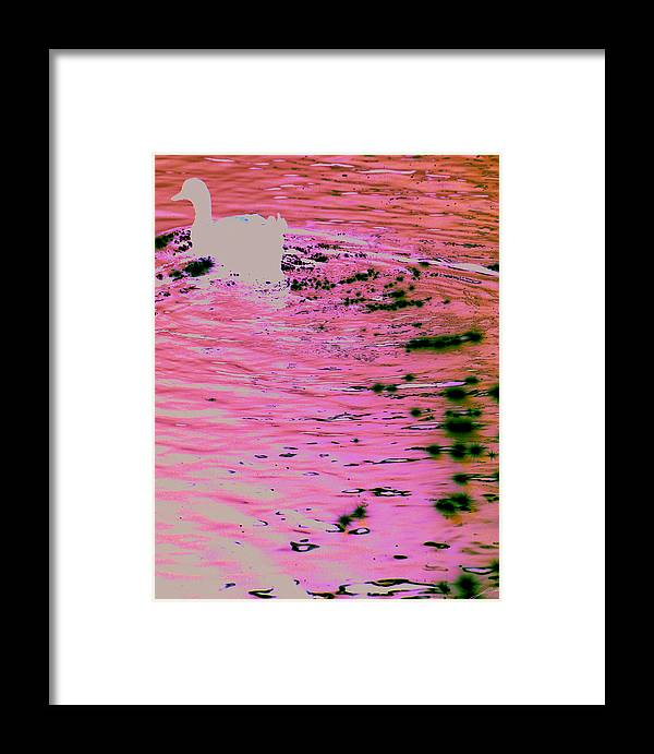 Swan Framed Print featuring the photograph Lake Trail by LoungeMode Productions
