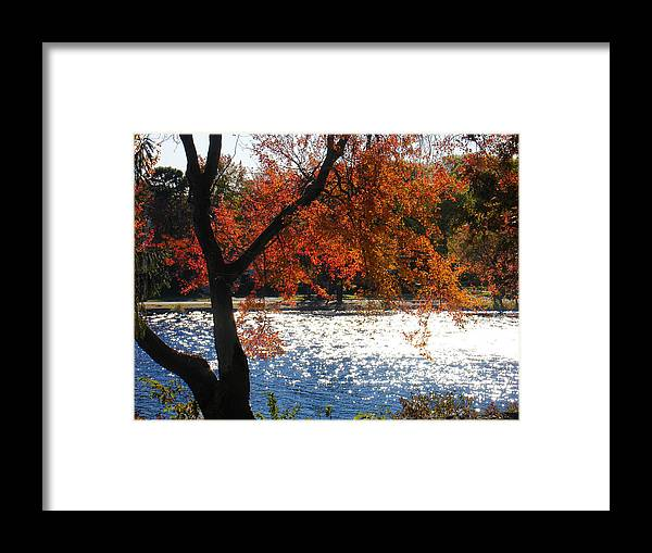 Landscape Framed Print featuring the photograph Lakewood by Steve Karol