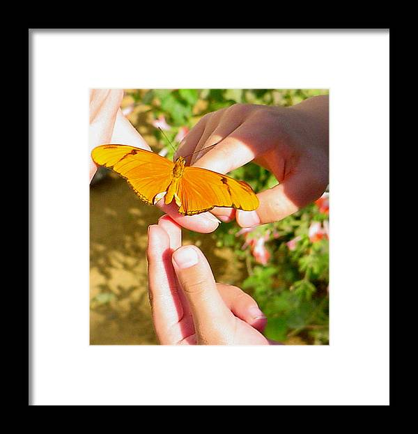 Butterfly Framed Print featuring the photograph Land On Me by PJ Cloud