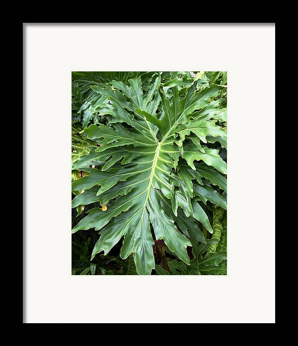 Fern Framed Print featuring the photograph Large Fern by Kenna Westerman