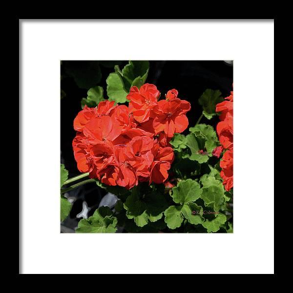 Flower Framed Print featuring the digital art Large Red Begonia Bloom by Kae Cheatham