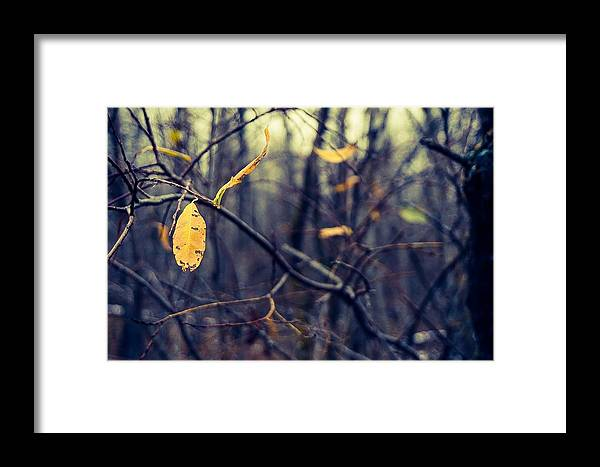 Landscape Photograph Framed Print featuring the photograph Last Bit Of Fall by Desmond Raymond