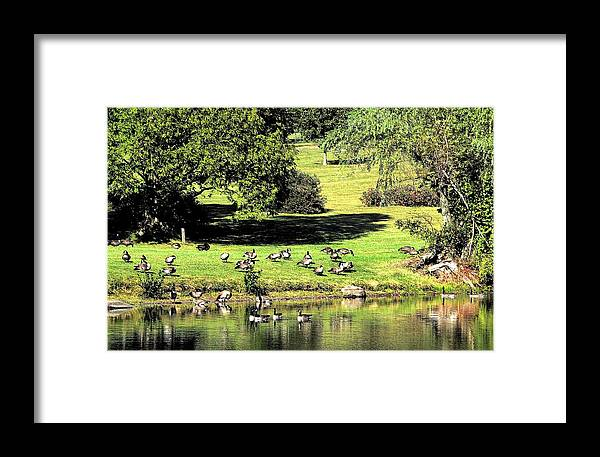 Bird Framed Print featuring the photograph Last Days Of Summer by Gaby Swanson