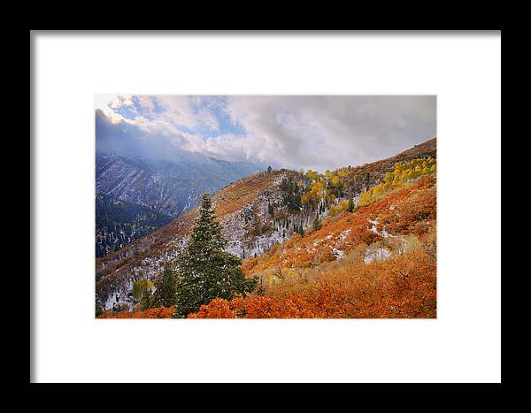 Forest Framed Print featuring the photograph Last Fall by Chad Dutson