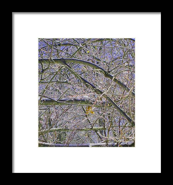 Leaf Framed Print featuring the photograph Last Leaf Of Winter by Misty VanPool