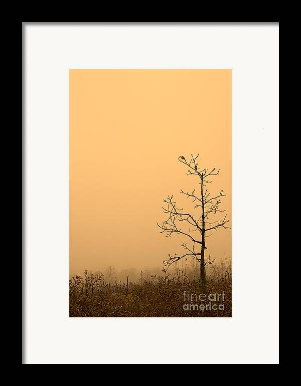Tree Framed Print featuring the photograph Last Leaves by Timothy Johnson