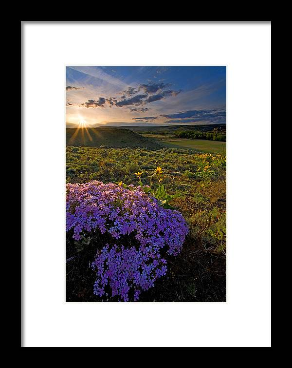 Wildflowers Framed Print featuring the photograph Last Light Of Spring by Mike Dawson