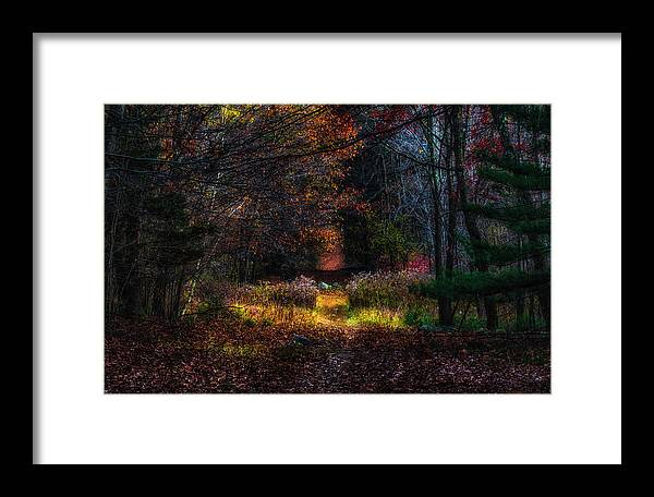 Forest Framed Print featuring the photograph Last Light by Rob Weisman
