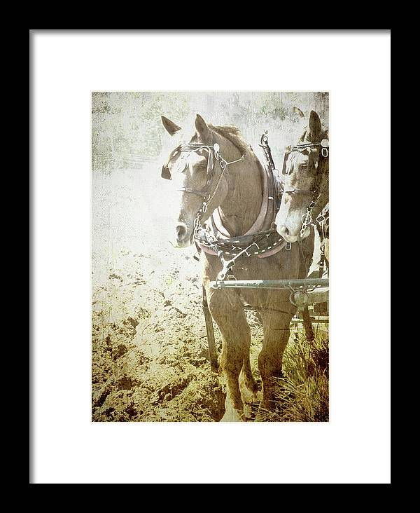 Horse Framed Print featuring the photograph Last Row by Char Szabo-Perricelli