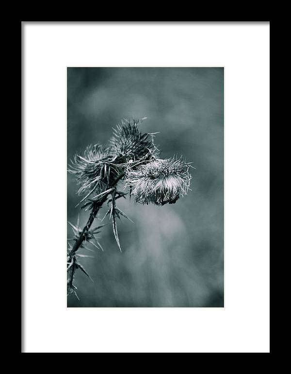 Photograph Framed Print featuring the photograph Last Year by Tingy Wende