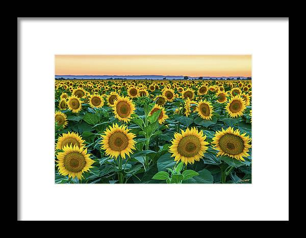 California Framed Print featuring the photograph Late Bloomer by Greg Mitchell Photography